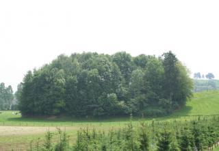 Burggraaf (Gulpen)